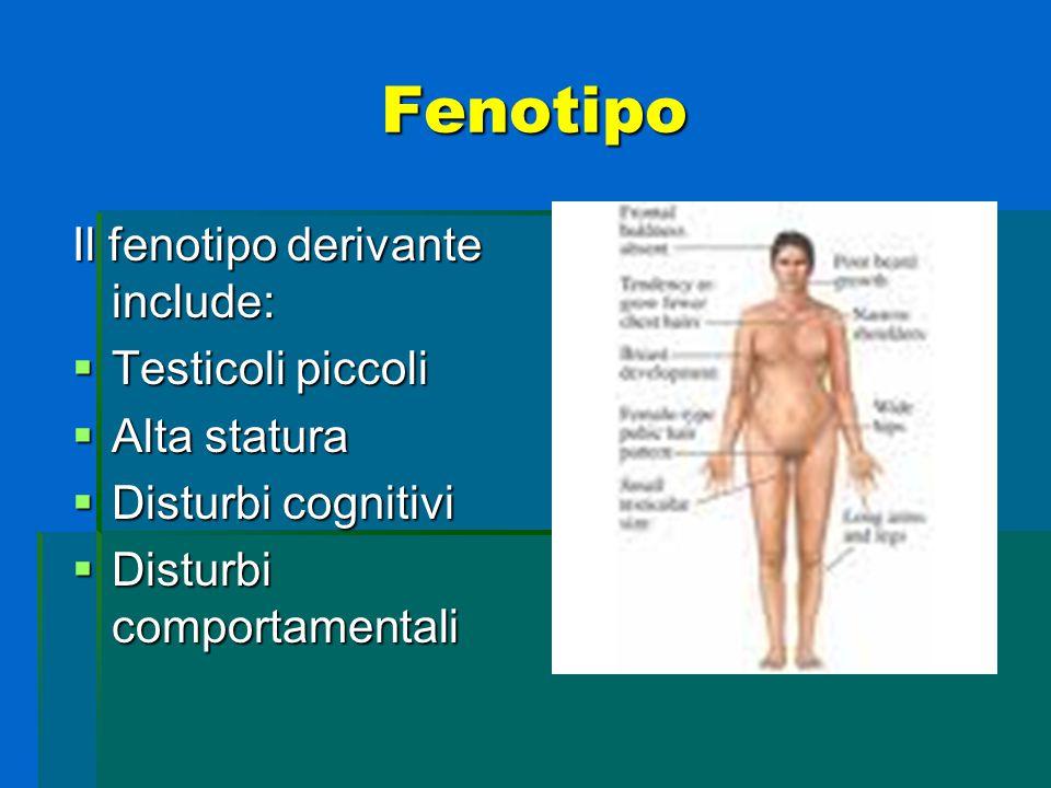 Fenotipo Il fenotipo derivante include: Testicoli piccoli Alta statura