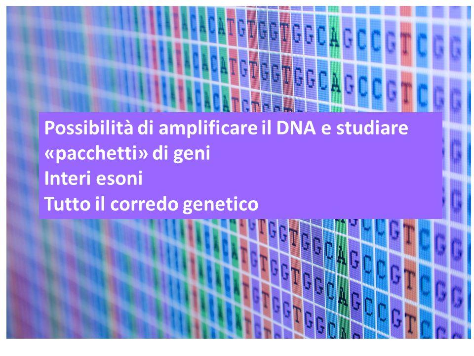 Possibilità di amplificare il DNA e studiare «pacchetti» di geni