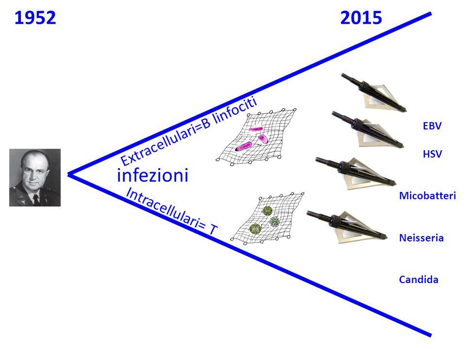 1952 2015 infezioni Extracellulari=B linfociti Intracellulari= T EBV