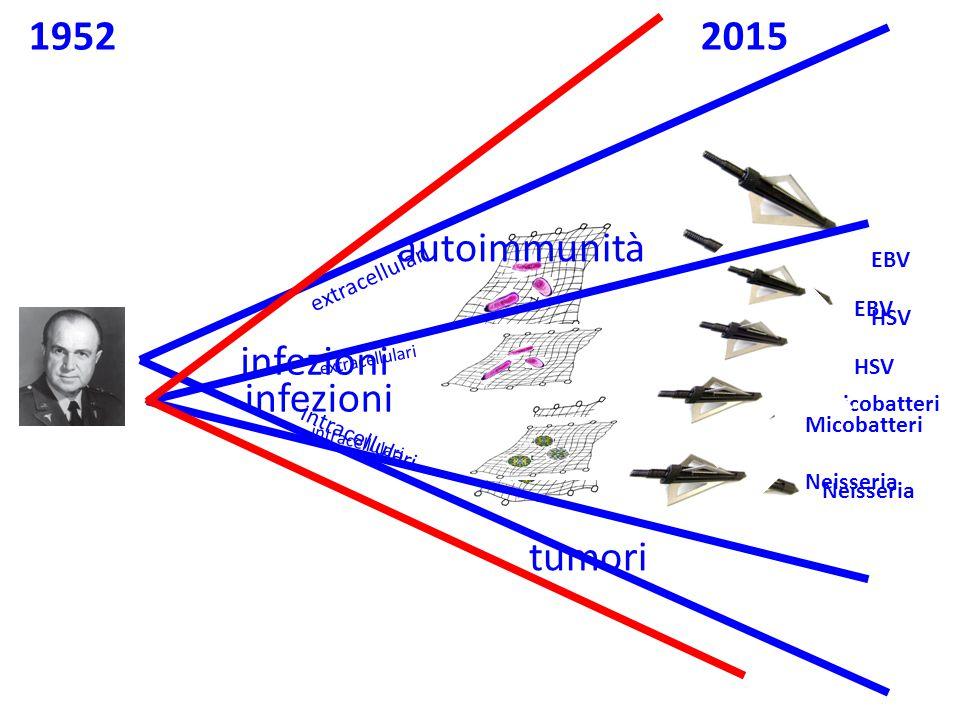 1952 2015 autoimmunità infezioni infezioni tumori EBV extracellulari