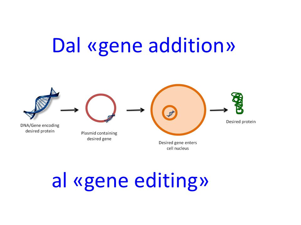 Dal «gene addition» al «gene editing»