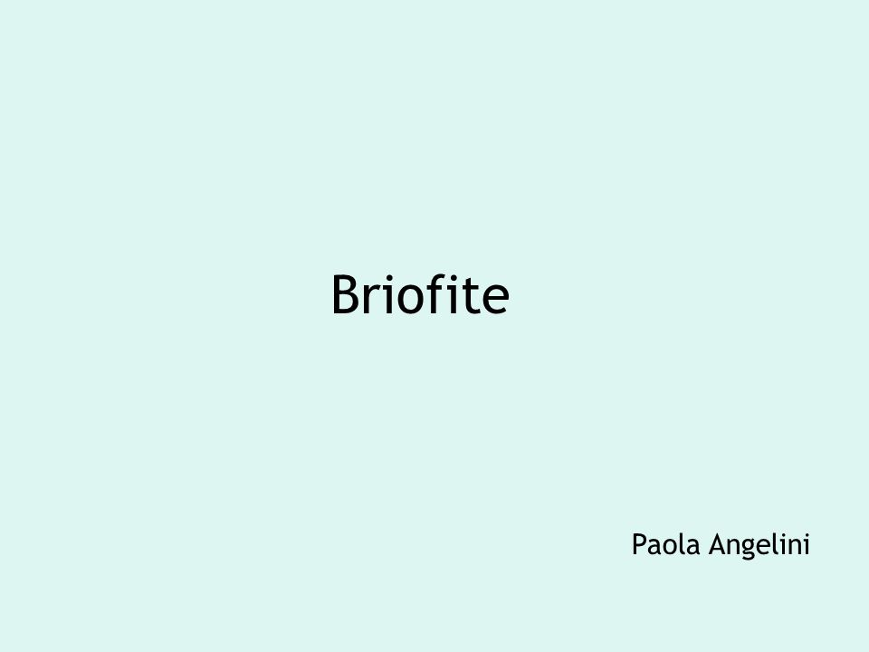 Briofite Paola Angelini