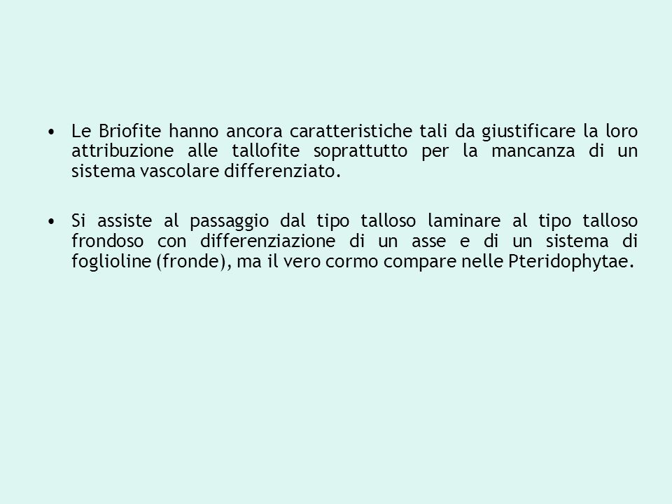 Le Briofite hanno ancora caratteristiche tali da giustificare la loro attribuzione alle tallofite soprattutto per la mancanza di un sistema vascolare differenziato.