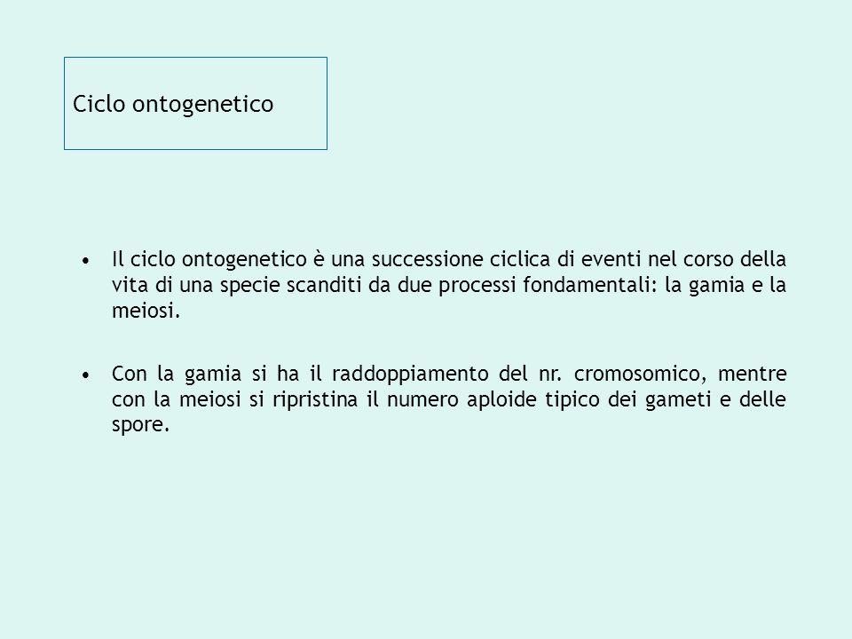 Ciclo ontogenetico