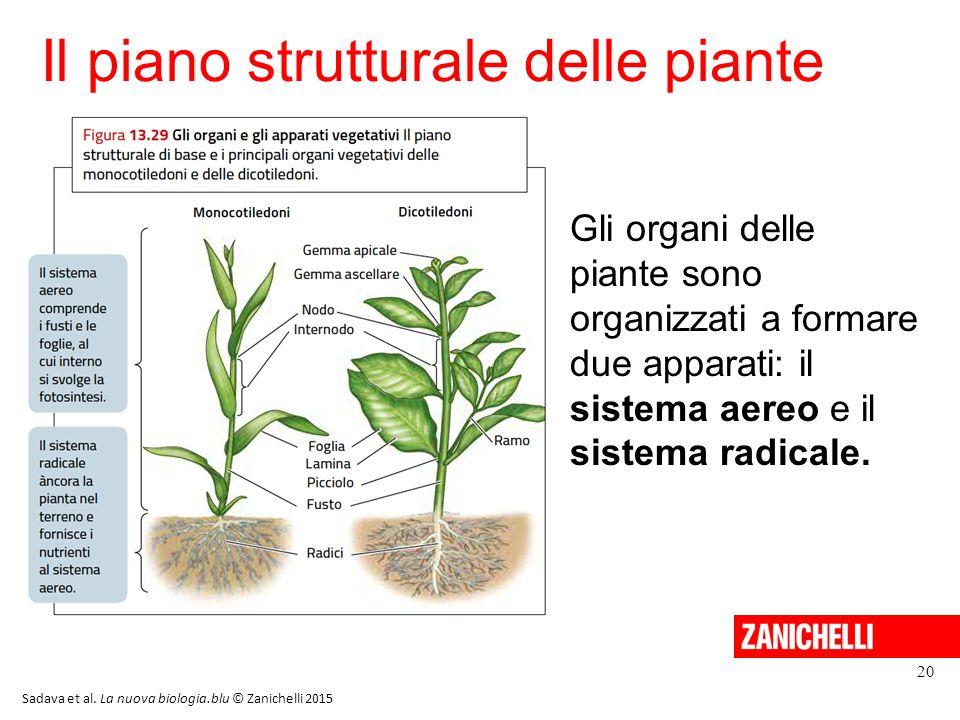 Il piano strutturale delle piante