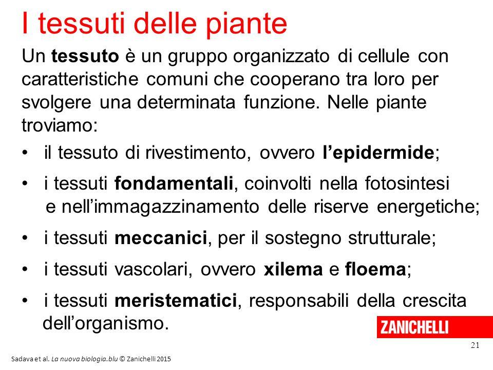 I tessuti delle piante 13/11/11.