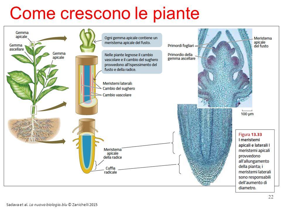 Come crescono le piante