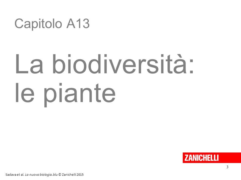 La biodiversità: le piante Capitolo A13 3 13/11/11 3