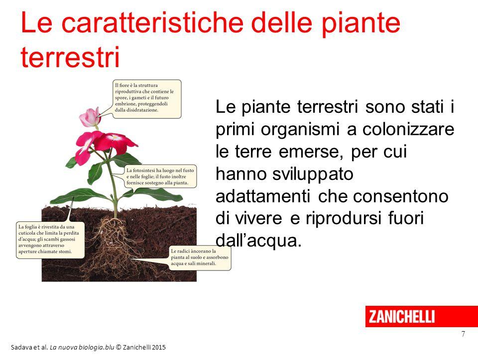Le caratteristiche delle piante terrestri