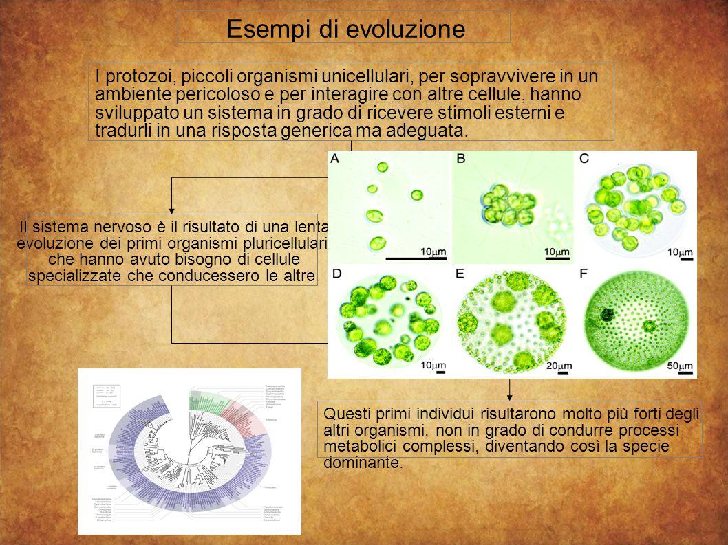 Esempi di evoluzione