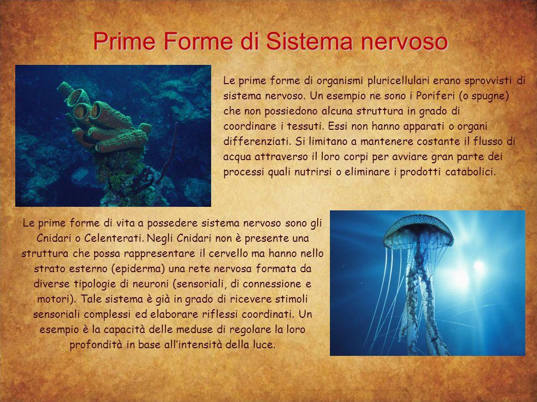 Prime Forme di Sistema nervoso