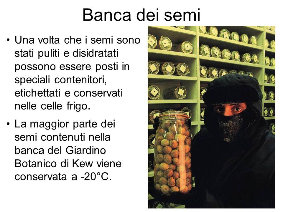 Banca dei semi