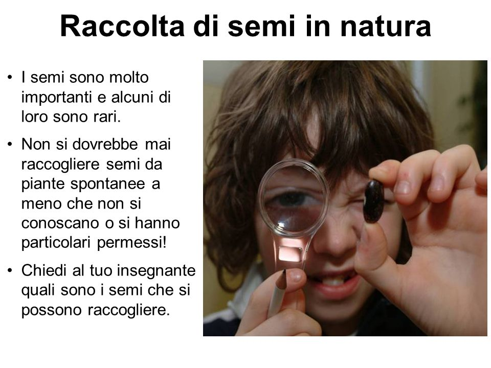 Raccolta di semi in natura