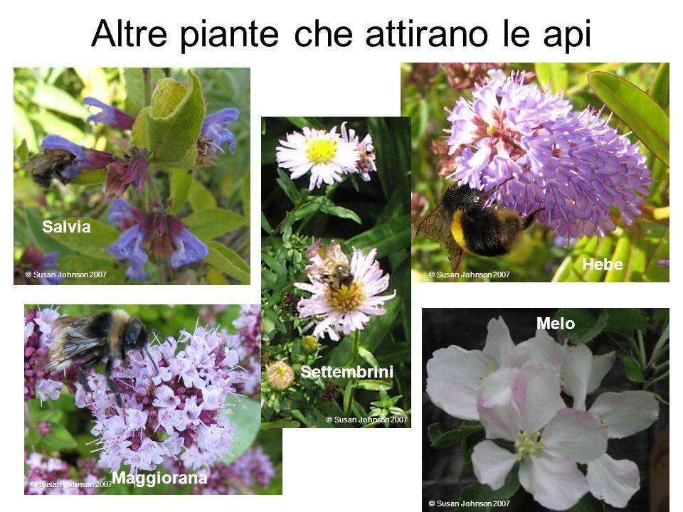Altre piante che attirano le api