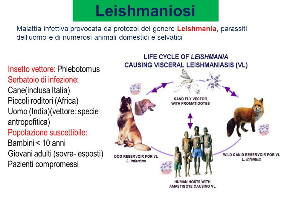 Leishmaniosi Malattia infettiva provocata da protozoi del genere Leishmania, parassiti dell'uomo e di numerosi animali domestici e selvatici.