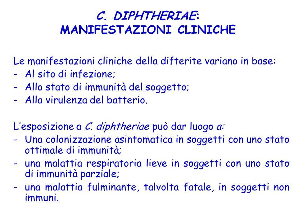 C. DIPHTHERIAE: MANIFESTAZIONI CLINICHE
