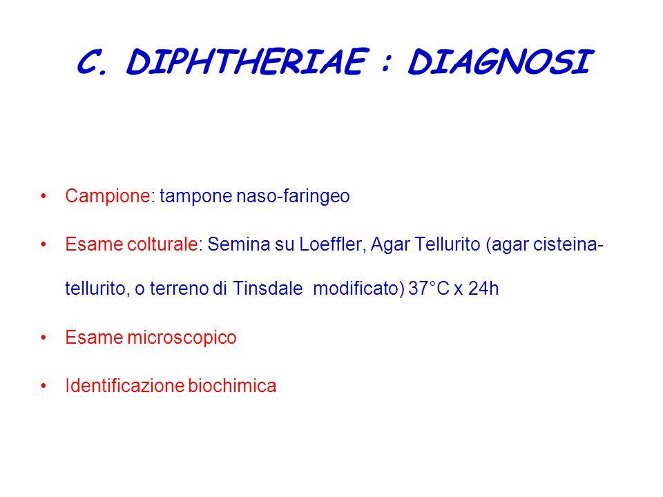 C. DIPHTHERIAE : DIAGNOSI
