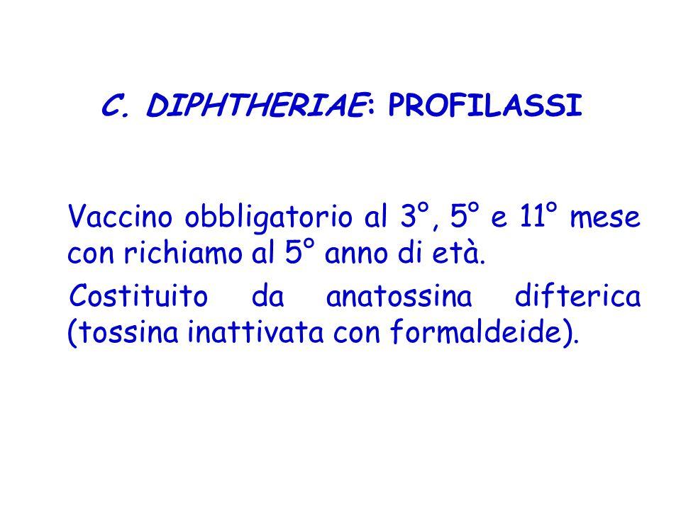 C. DIPHTHERIAE: PROFILASSI