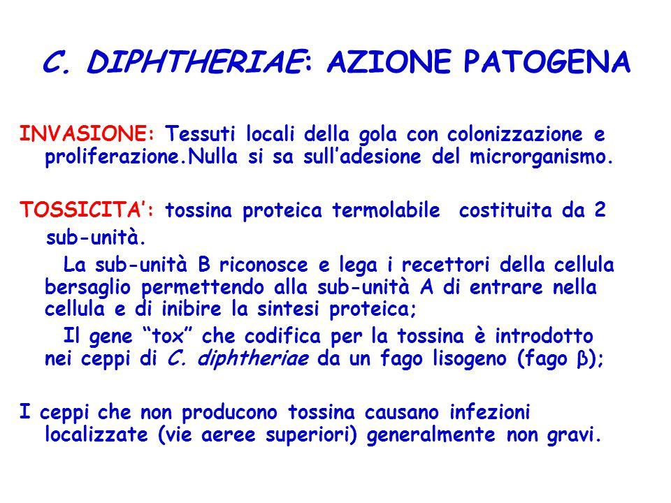 C. DIPHTHERIAE: AZIONE PATOGENA