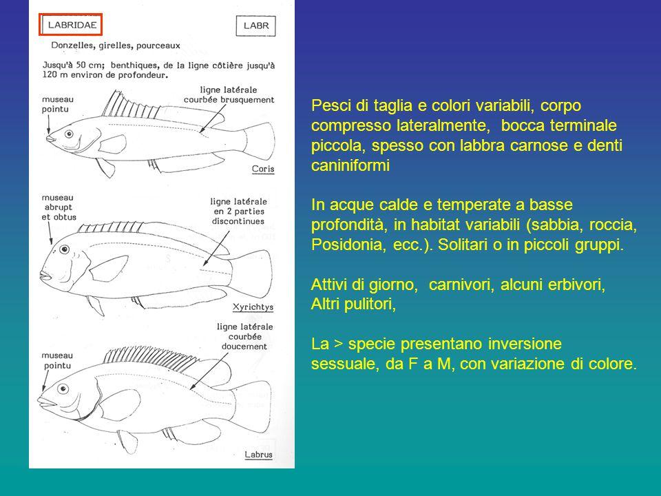 Pesci di taglia e colori variabili, corpo
