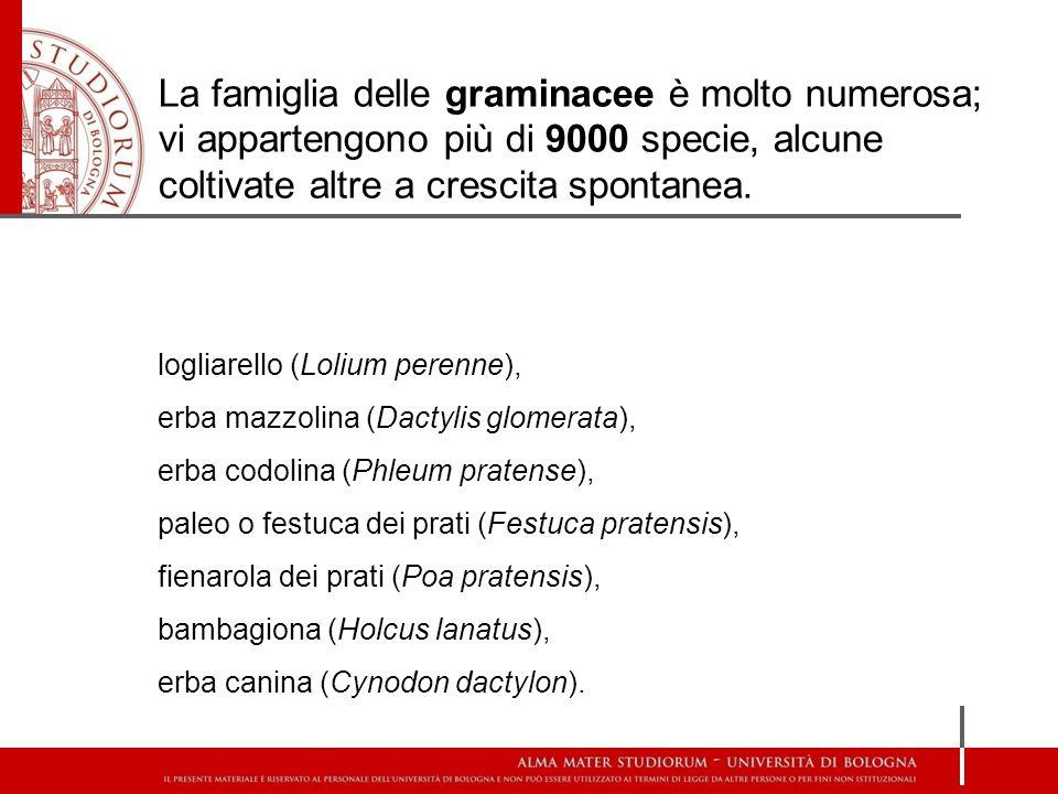 La famiglia delle graminacee è molto numerosa; vi appartengono più di 9000 specie, alcune coltivate altre a crescita spontanea.