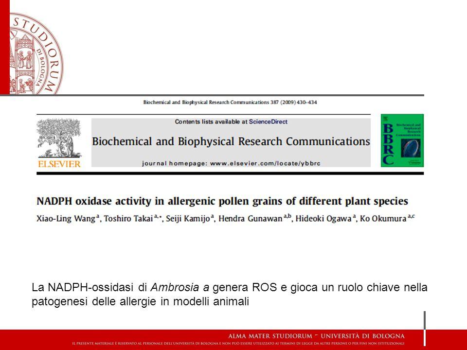 La NADPH-ossidasi di Ambrosia a genera ROS e gioca un ruolo chiave nella