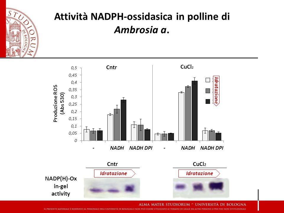 Attività NADPH-ossidasica in polline di Ambrosia a.
