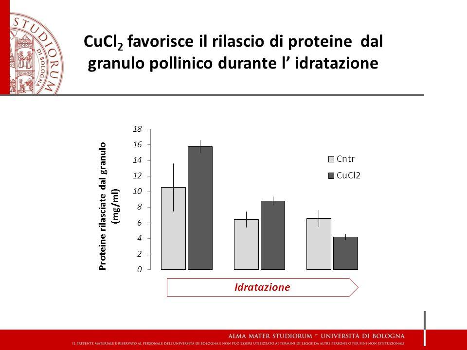 CuCl2 favorisce il rilascio di proteine dal