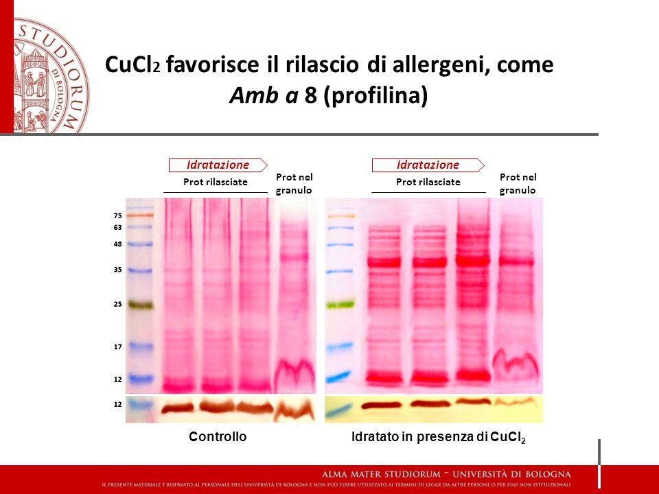 CuCl2 favorisce il rilascio di allergeni, come Amb a 8 (profilina)