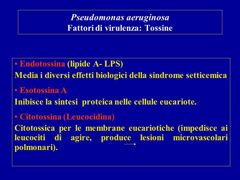 Pseudomonas aeruginosa Fattori di virulenza: Tossine