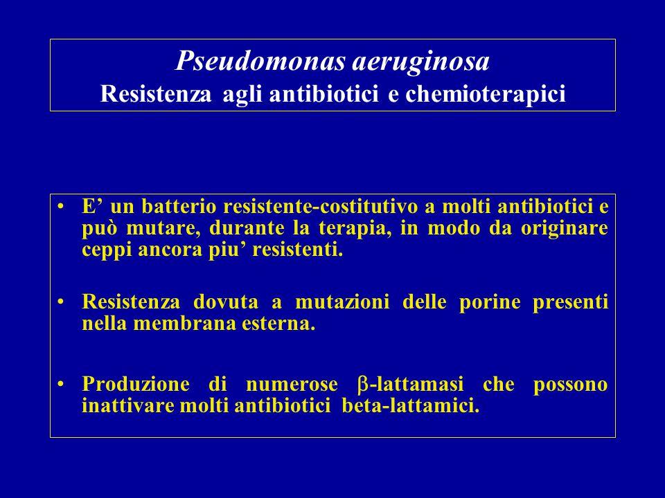 Pseudomonas aeruginosa Resistenza agli antibiotici e chemioterapici