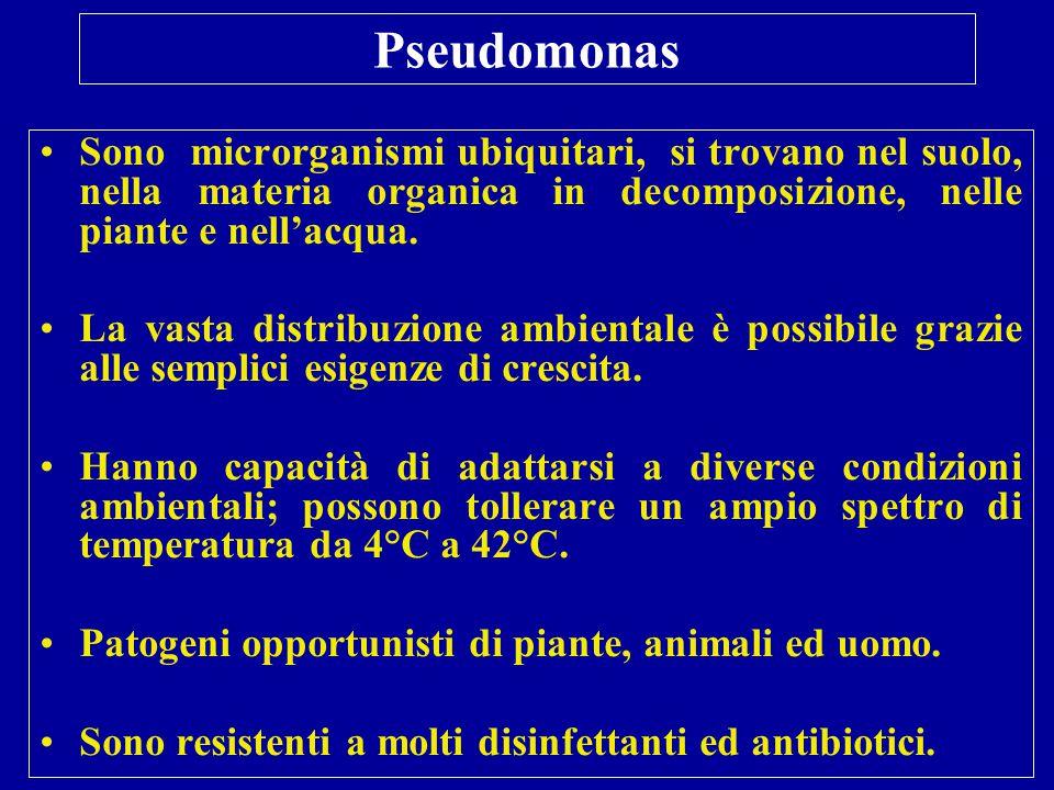 Pseudomonas Sono microrganismi ubiquitari, si trovano nel suolo, nella materia organica in decomposizione, nelle piante e nell'acqua.