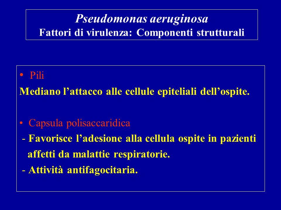 Pseudomonas aeruginosa Fattori di virulenza: Componenti strutturali