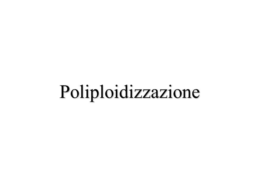 Poliploidizzazione