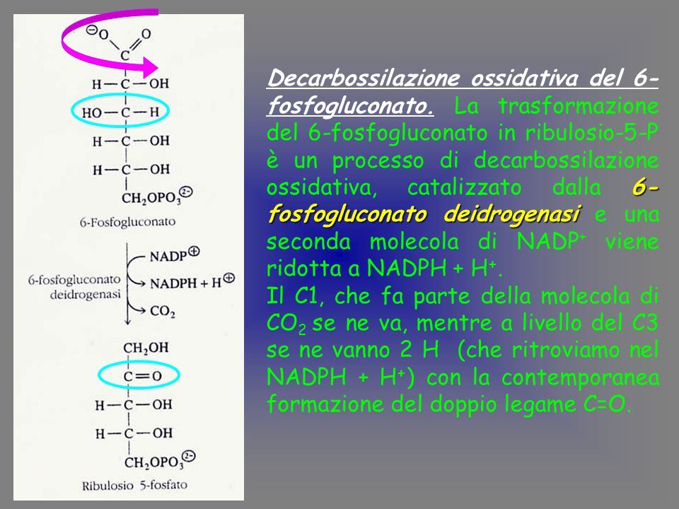 Decarbossilazione ossidativa del 6-fosfogluconato