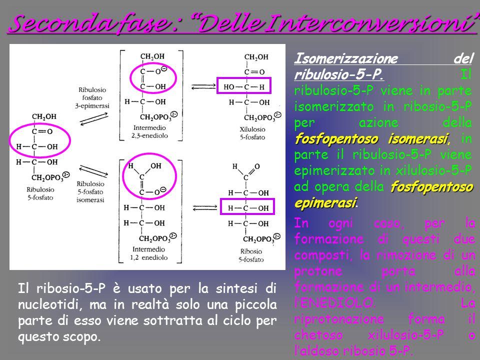 Seconda fase : Delle Interconversioni