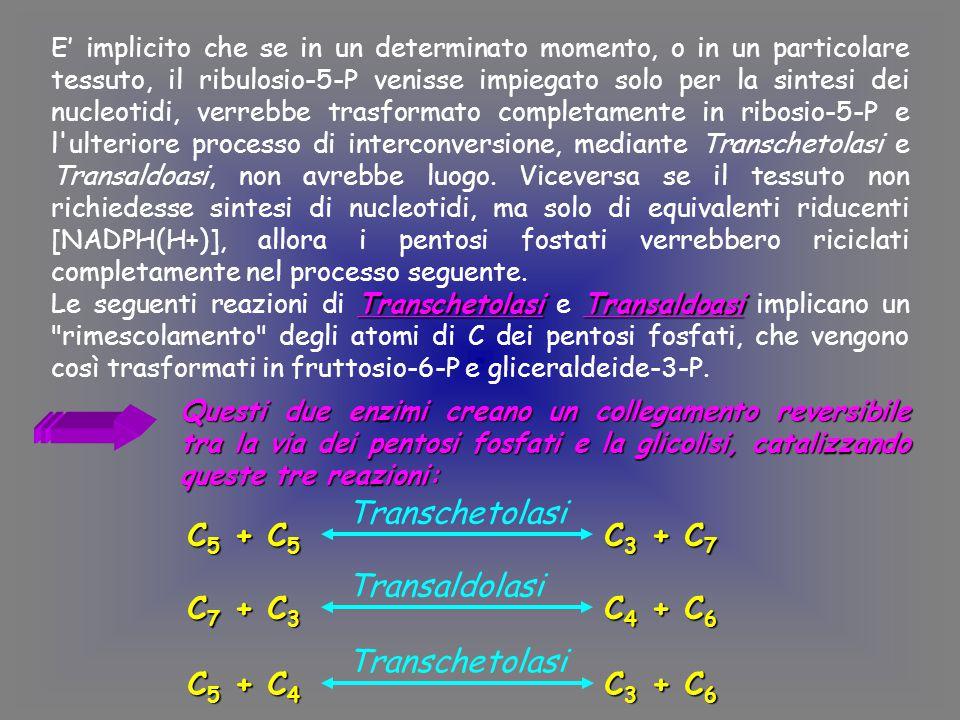 Transchetolasi C5 + C5 C3 + C7 Transaldolasi C7 + C3 C4 + C6