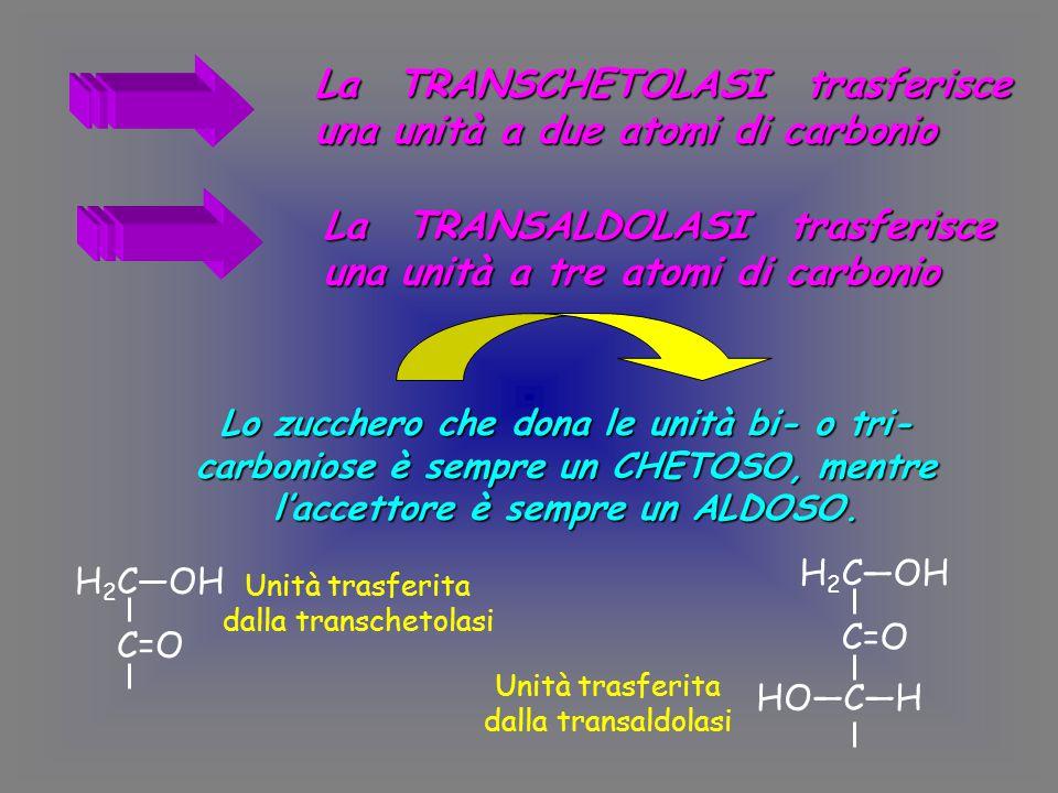 La TRANSCHETOLASI trasferisce una unità a due atomi di carbonio