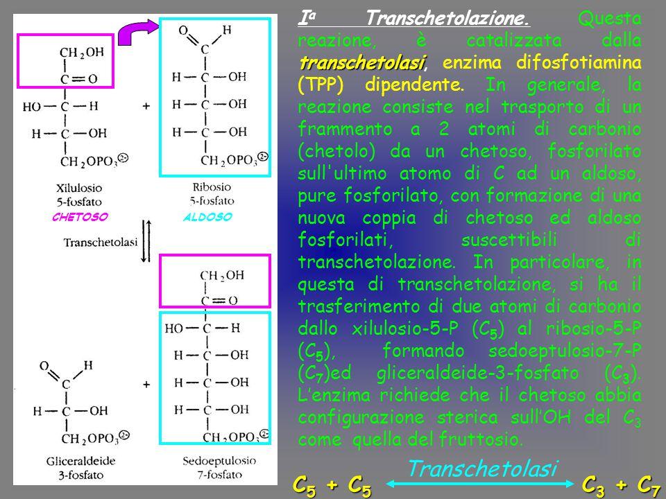 Transchetolasi C5 + C5 C3 + C7