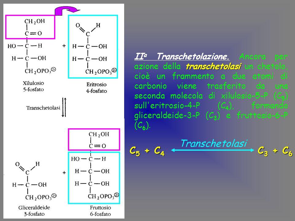 Transchetolasi C5 + C4 C3 + C6