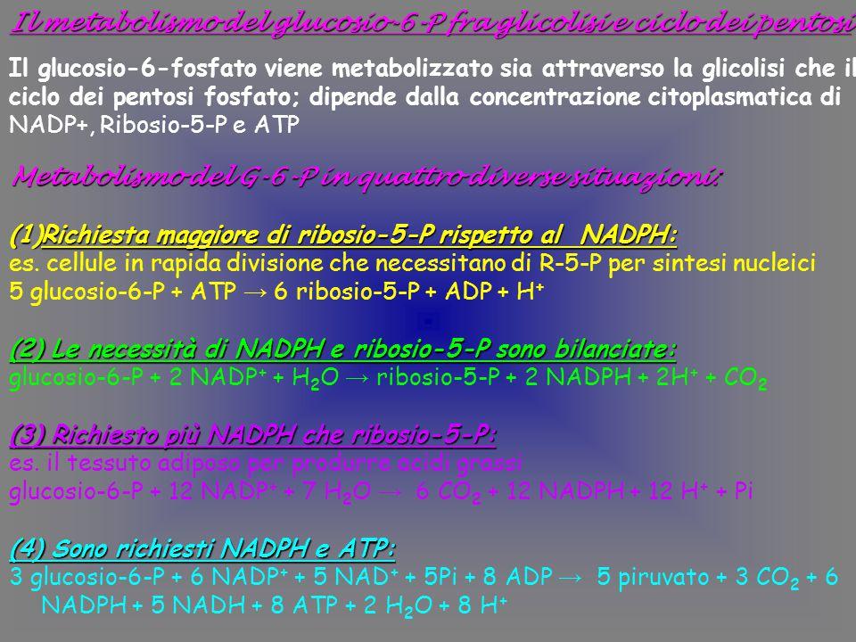 Il metabolismo del glucosio-6-P fra glicolisi e ciclo dei pentosi