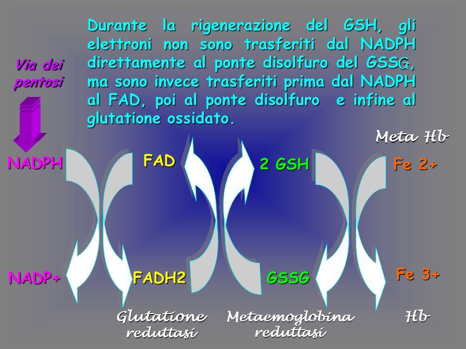 Metaemoglobina reduttasi