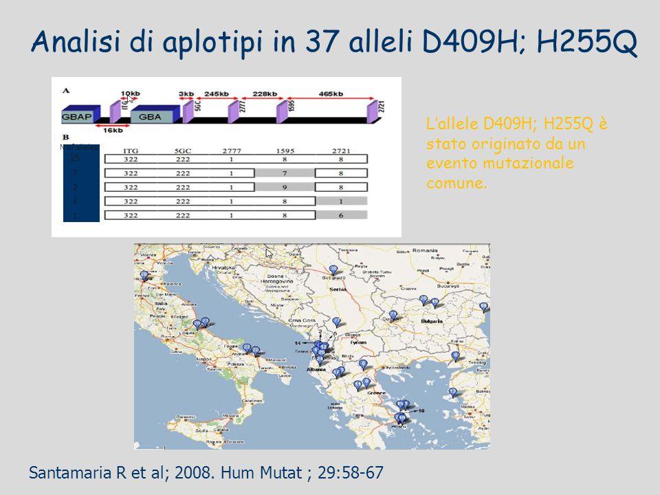 Analisi di aplotipi in 37 alleli D409H; H255Q