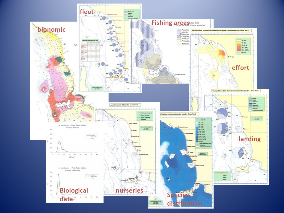 fleet Fishing areas bionomic effort landing Biological data nurseries Species distribution