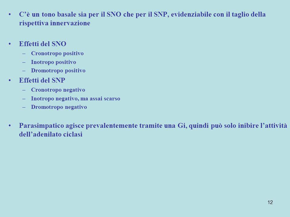 C'è un tono basale sia per il SNO che per il SNP, evidenziabile con il taglio della rispettiva innervazione