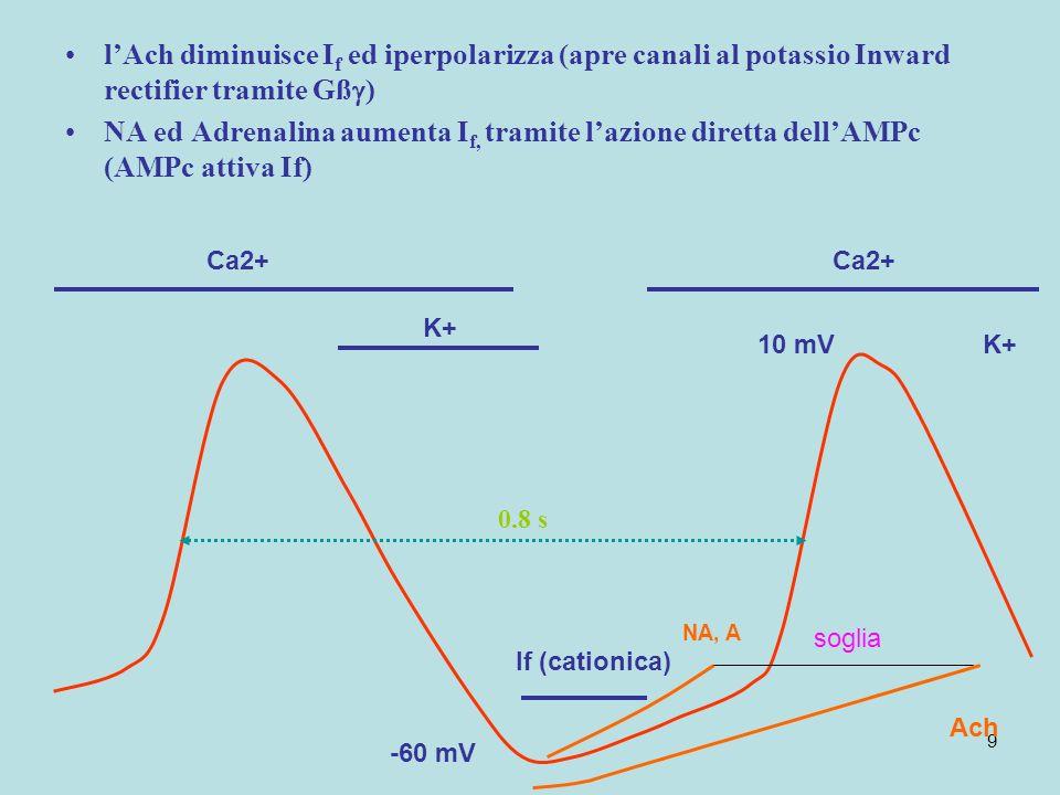 l'Ach diminuisce If ed iperpolarizza (apre canali al potassio Inward rectifier tramite Gß)