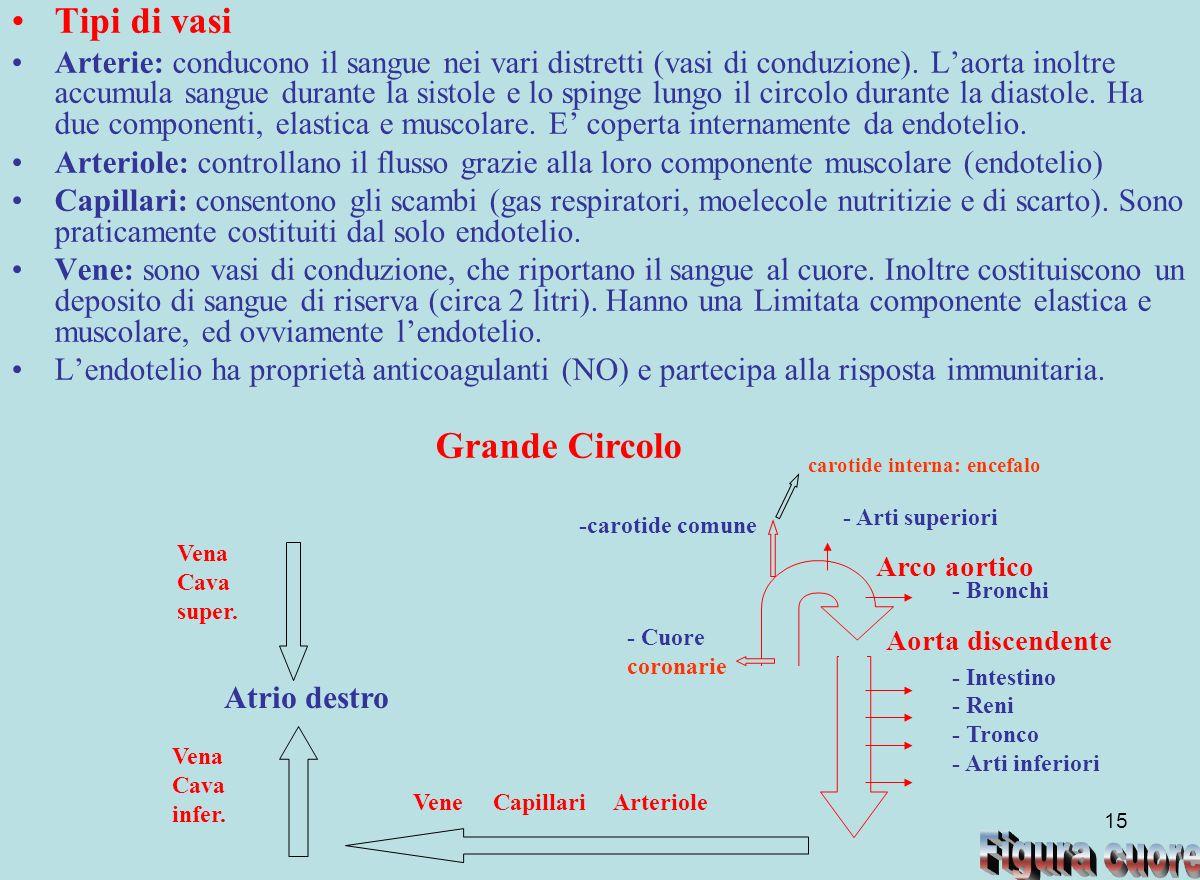 Figura cuore Tipi di vasi Grande Circolo