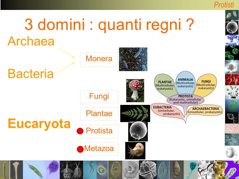 3 domini : quanti regni Archaea Bacteria Eucaryota Monera Fungi