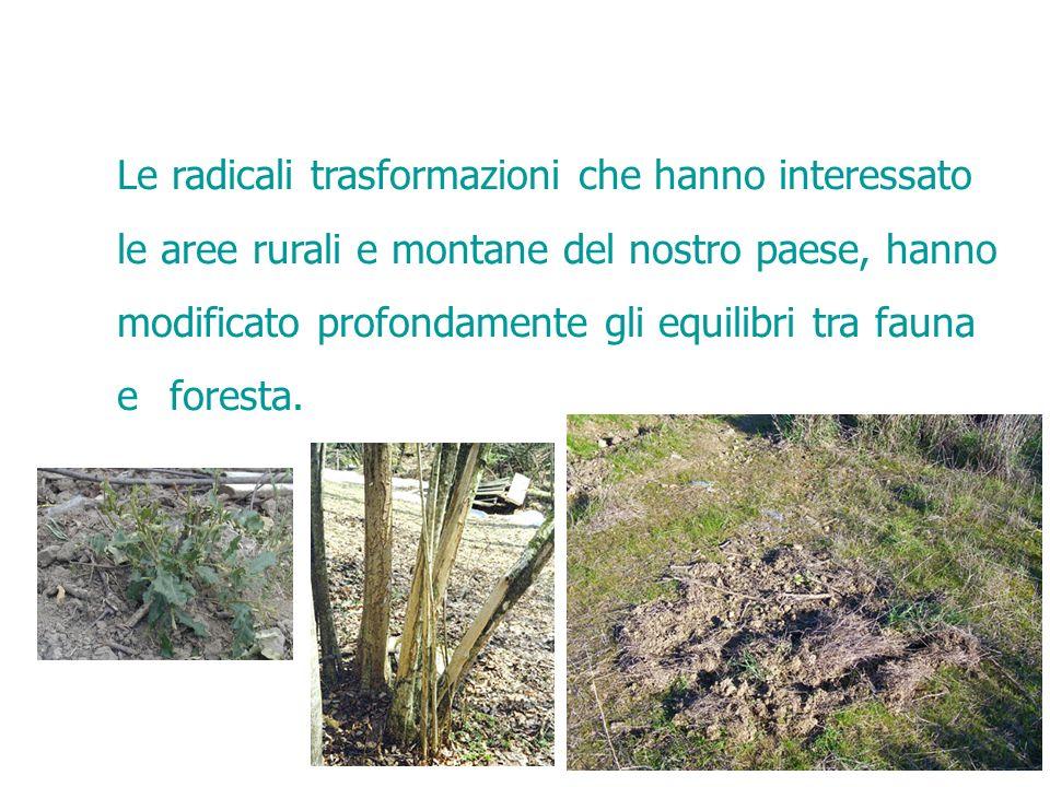 Le radicali trasformazioni che hanno interessato le aree rurali e montane del nostro paese, hanno modificato profondamente gli equilibri tra fauna e foresta.