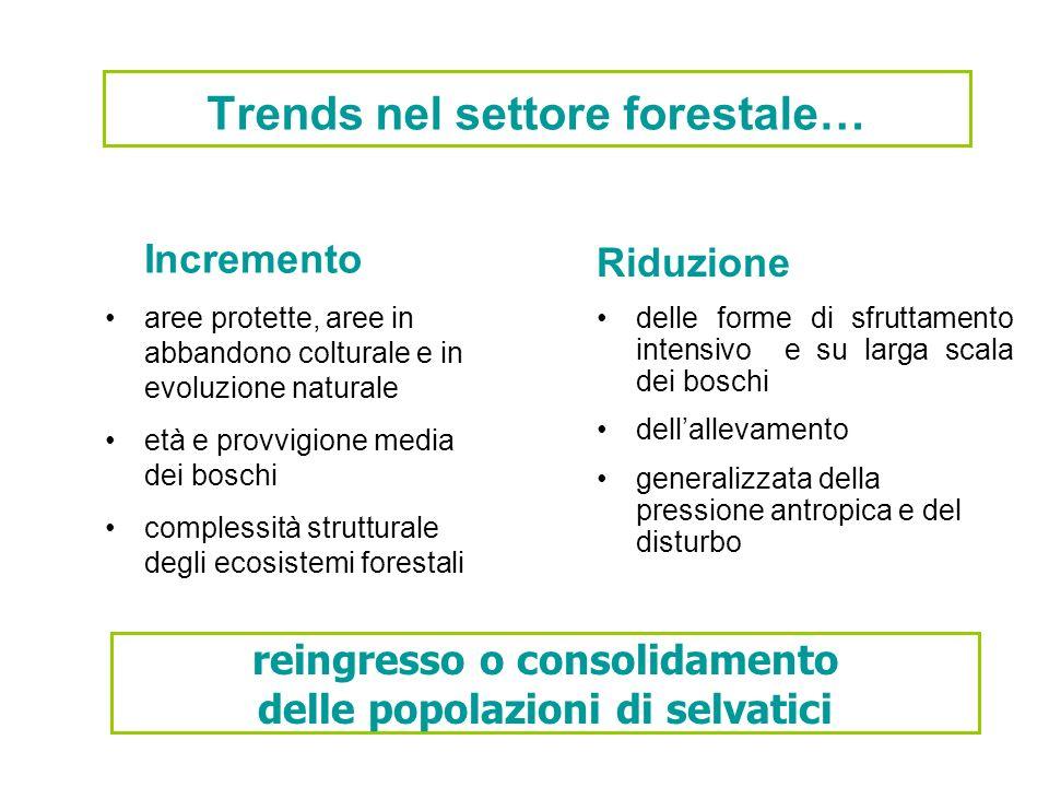 Trends nel settore forestale…